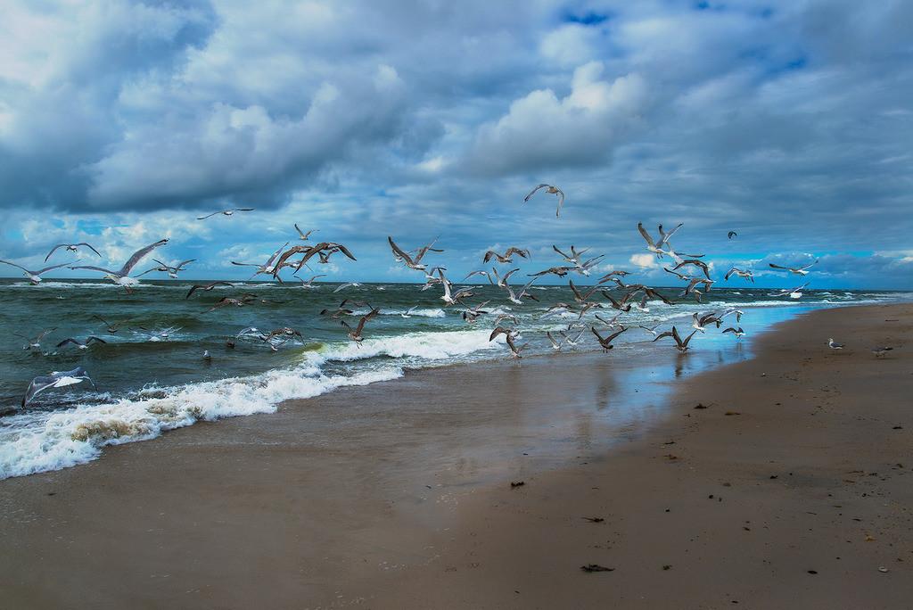 Möwen am Strand | Möwen am Strand, Weststrand, Sylt