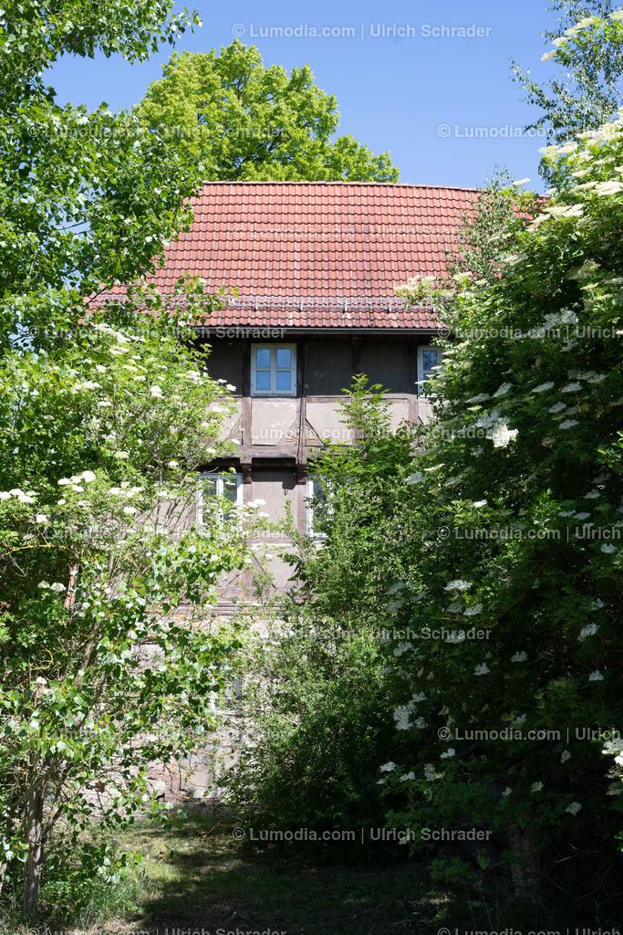 10049-11001 - Dedeleben _ Gemeinde Huy | max. Auflösung 8256 x 5504
