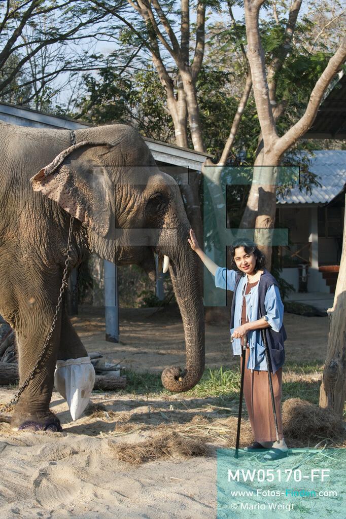 MW05170-FF   Thailand   Lampang   Reportage: Krankenhaus für Elefanten   Gründerin der Elefantenklinik Soraida Salwala streichelt die beinamputierte Elefantenkuh Motala.  ** Feindaten bitte anfragen bei Mario Weigt Photography, info@asia-stories.com **