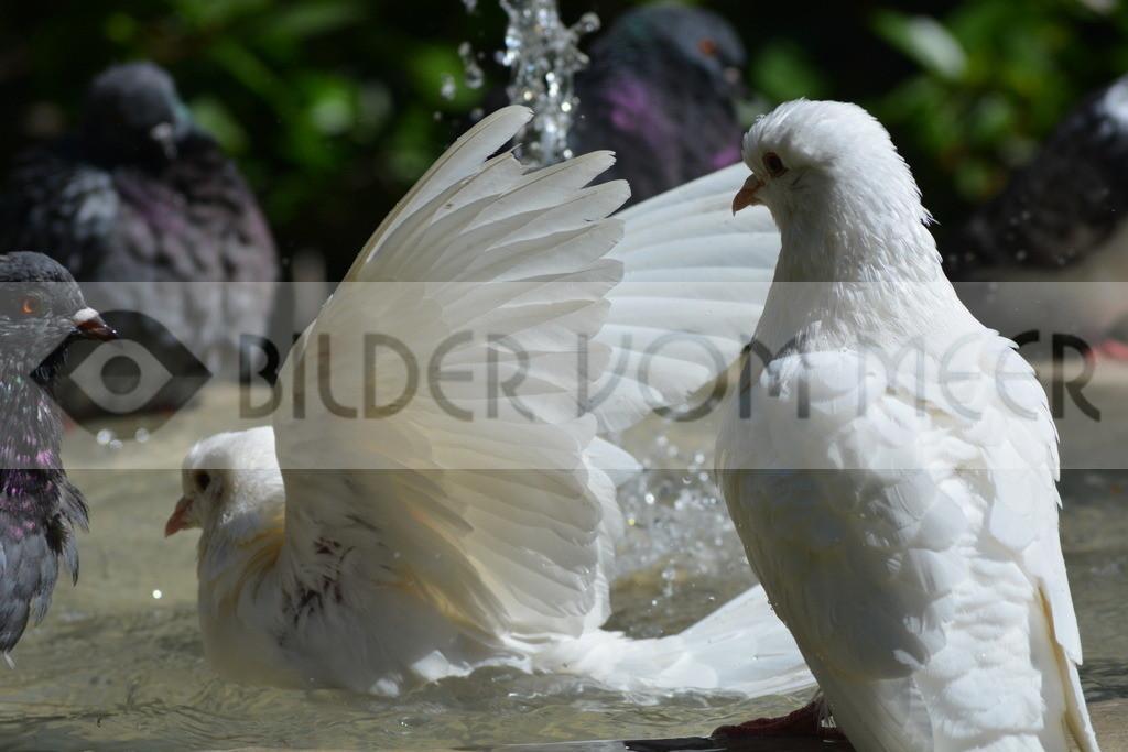 Fotoausstellung Meer Bilder | Badespass mit weissen Tauben Malaga