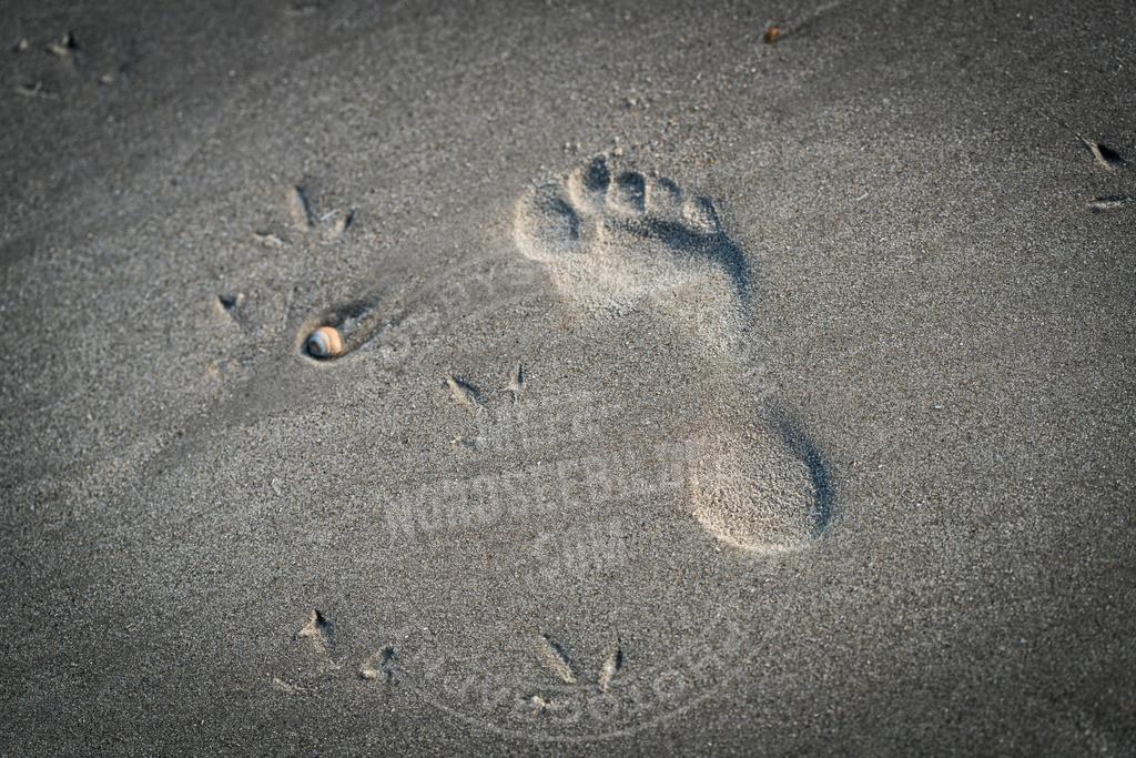_DSC7702 | Spuren im Sand