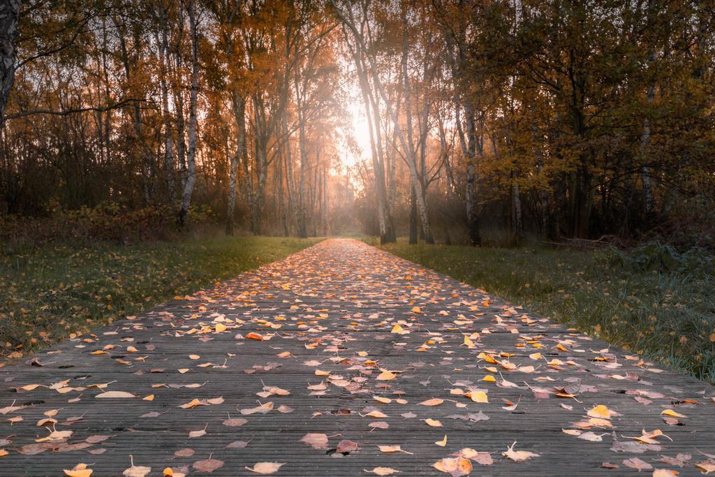 Herbstmorgen im Allerpark