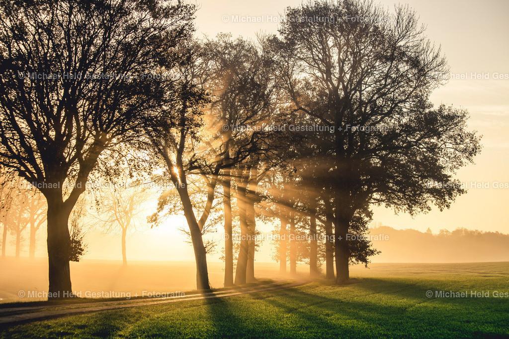 11 November | Morgenstund hat Gold im Mund | Ein grandioser Sonnenaufgang im Frühnebel bei Pratjau