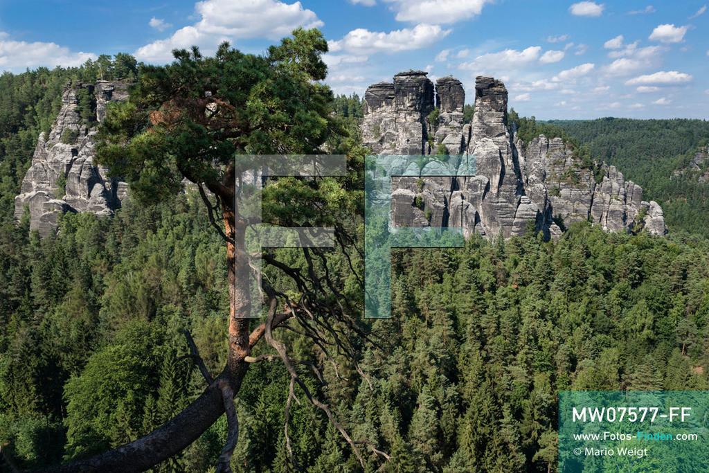 MW07577-FF   Deutschland   Sachsen   Sächsische Schweiz   Gansfelsen (Felsformation) über dem Wehlgrund im Elbsandsteingebirge  ** Feindaten bitte anfragen bei Mario Weigt Photography, info@asia-stories.com **