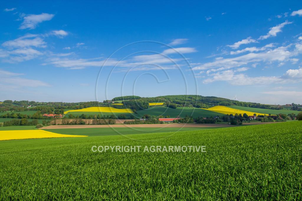 20130515-_MG_6645   Getreidefelder im Frühling - AGRARMOTIVE Bildagentur
