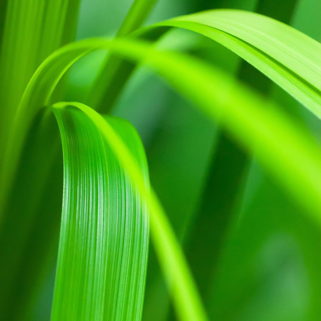 Best. Nr. Farbstimmungen10 | Tropische Grünpflanze