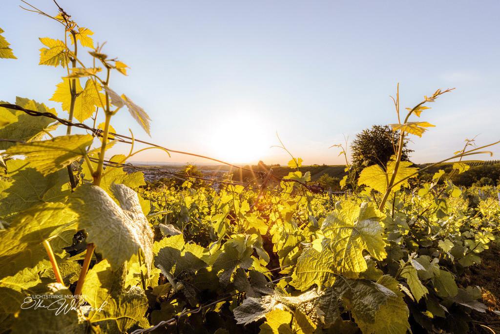 Abendsonne   Rauenberg - ein Abend im Weinberg