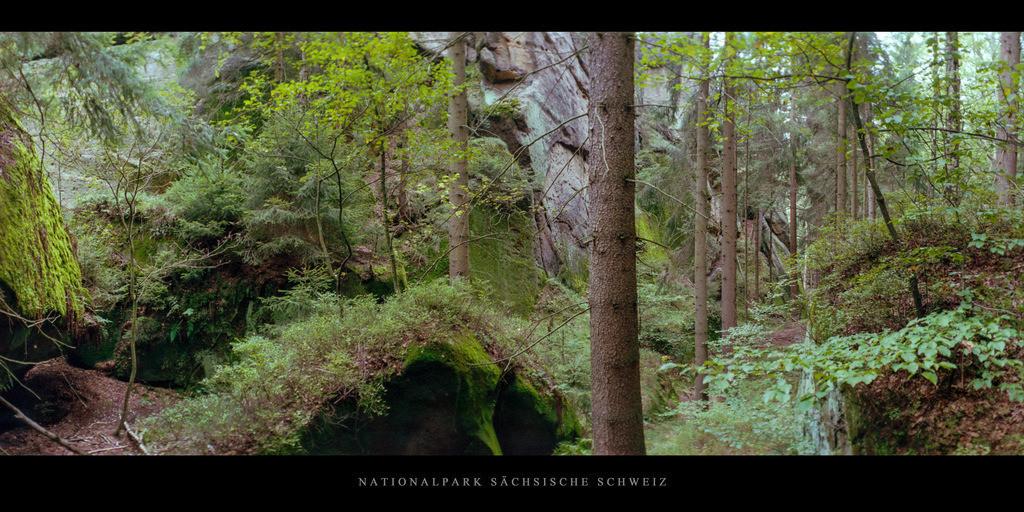 Sächsische Schweiz Elbsandsteingebirge | Wald im Nationalpark Sächsische Schweiz im Elbsandsteingebirge
