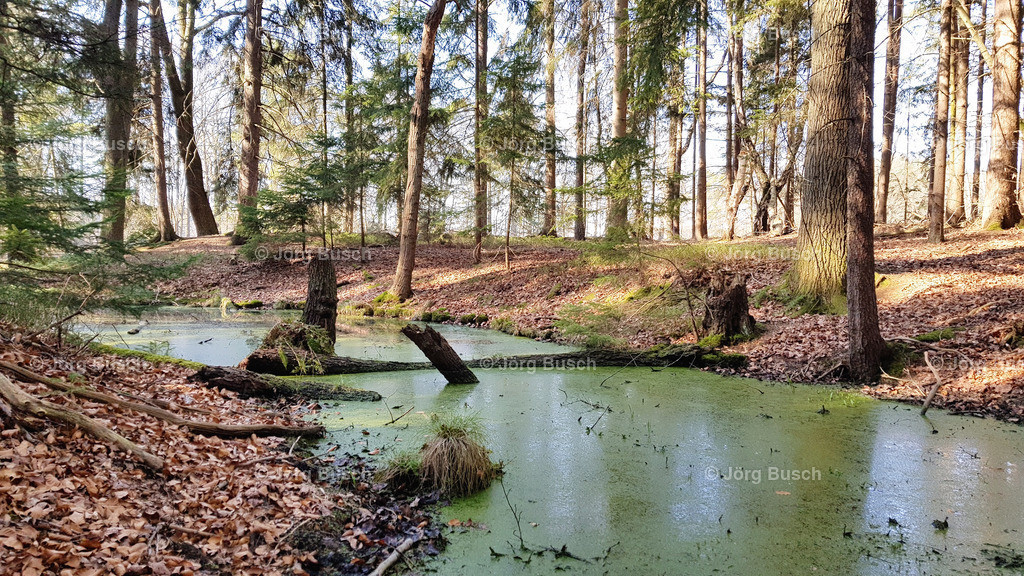 Wald_9