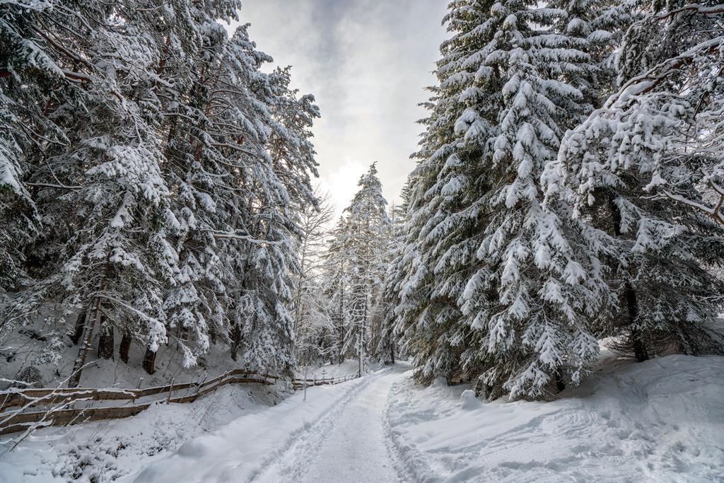Winterspaziergang | Winter am Möserer See