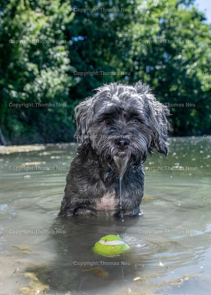 DSC_4744 | Bensheim, Badesee, Sommer, Stadtmagaziin 54, Hund, Ball, Wasser, ,, Bild: Thomas Neu