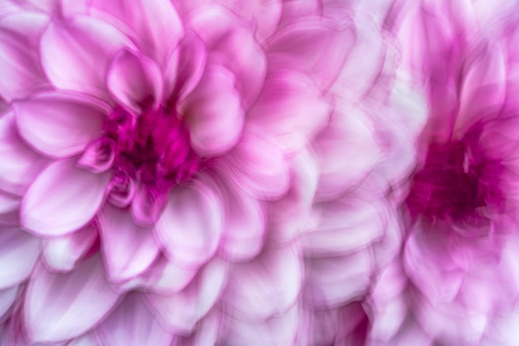 Abstraktes Portrait einer violetten Seerosen-Dahlie   Best. Nr. d_2020_08_0370. Einen Anwendungsvorschlag finden Sie hier: https://shop.soulimages.eu/img/pp5cgt (Wartebereich eines Krankenhauses). Weitere Einrichtungsbeispiele sind in der Galerie