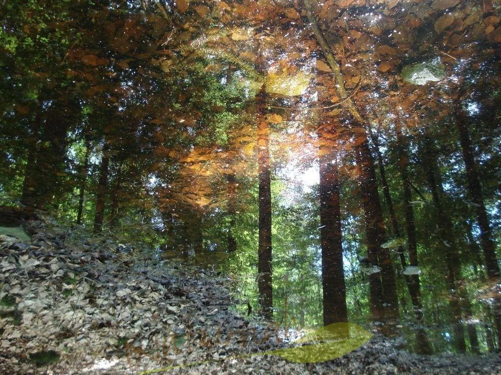 Zauberwald | Wundersame Lichtspiele laden Dich ein, den Zauberwald zu erkunden.