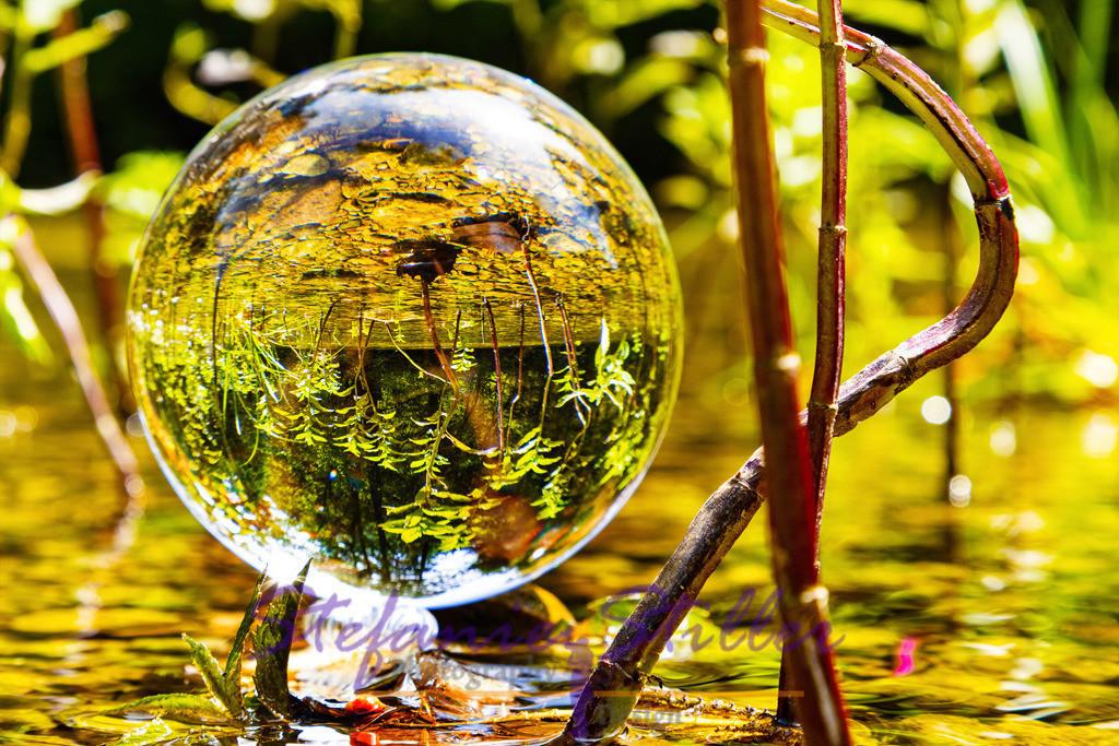 Lakeforest / Seewald   Close-up: Lensball placed in the middle of small lake plants / Nahaufnahme: Lensball der in die Mitte von kleinen Wasserpflanzen plaziert wurde