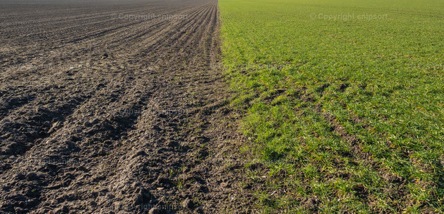 Two-part arable land | A processed and unprocessed field in the middle