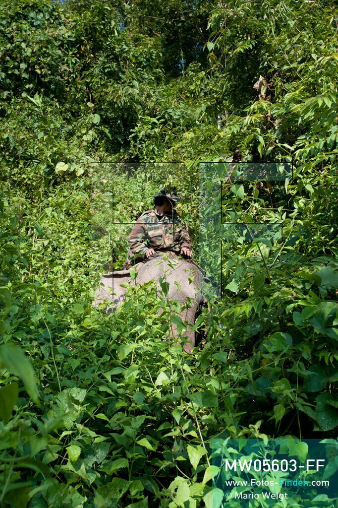 MW05603-FF | Laos | Provinz Sayaboury | Reportage: Arbeitselefanten in Laos | Mahut auf seinem Arbeitselefanten im Dschungel.  Lane Xang -