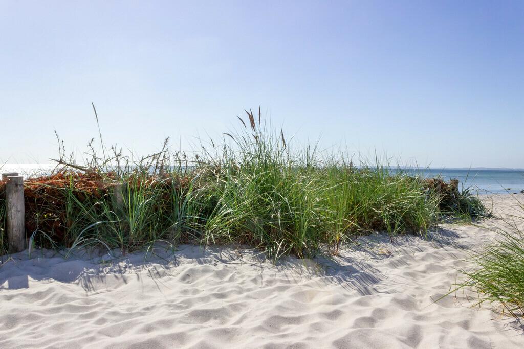 Strand in Damp   Strand in Damp im Frühling