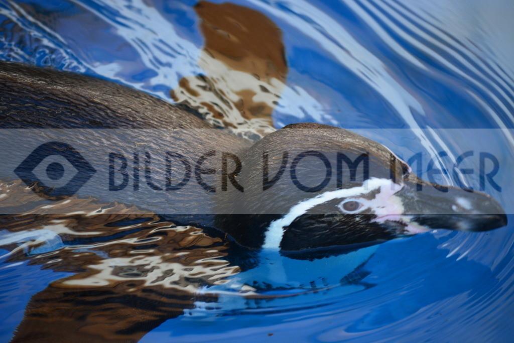 Fotoausstellung Meer Bilder | Pinguine Bilder