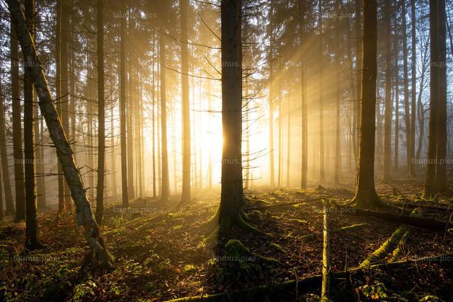 Nebel und Sonne im Wald | 28.11.2020, Schmitten (Hessen): Die tiefstehende Sonne scheint am Nachmittag bei Seelenberg an den Nebelgrenze durch den Wald