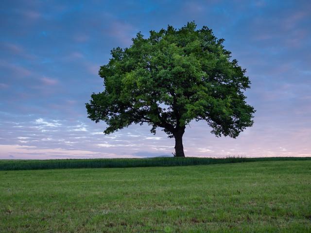 tree@spring