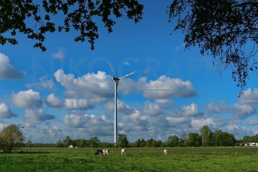 Windrad | Ein Windrad vor der Kulisse des frühlinghaften Wolkenhimmels. Auf der Weide am Fuße des Windrades weiden die Kühe.
