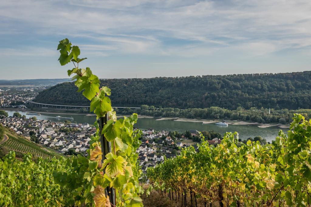 Weinberge Leutesdorf | Die Serie 'Leuchtender Rhein' zeigt den Rhein in leuchtenden Farben.