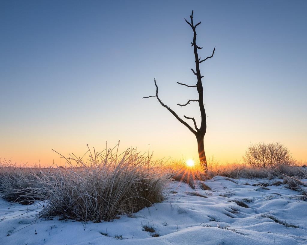 Eternal Winter   Toter Baum an einem sehr kalten Wintermorgen