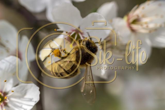 Fleißiges Bienchen 9