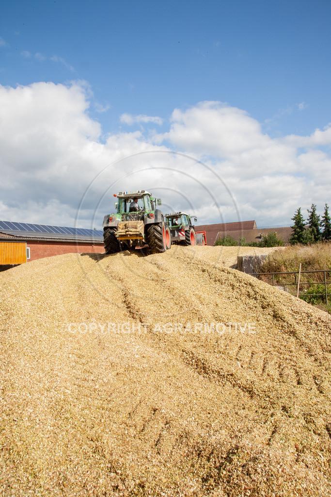 20080914-IMG_9126 | Silomais wird gehäckselt - AGRARFOTO Bilder aus der Landwirtschaft