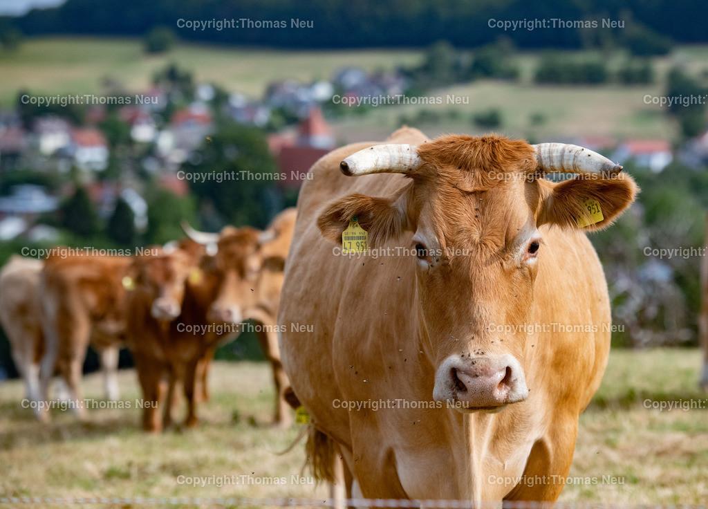 DSC_3793 | Lautertal, bli,Gadernheim, glückliche Kühe die nicht im Stall sondern im Freien mit ihren Kälbern grasen dürfen, dem Fotografen aber waren die Kühe skeptisch eingestellt und der Blick zeigt dass man lieber die Distanz wahren sollte, was in Corona Zeiten ja  schon in Fleisch und blut übergegangen ist, ,, Bild: Thomas Neu