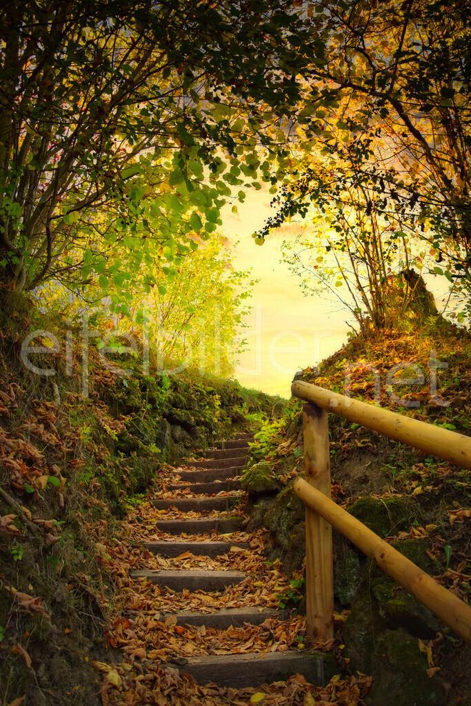 Treppe ins Licht | Mystische Morgenstimmung - goldene Stunde, fotografiert bei in Strohn in der Eifel (Vulkaneifel)