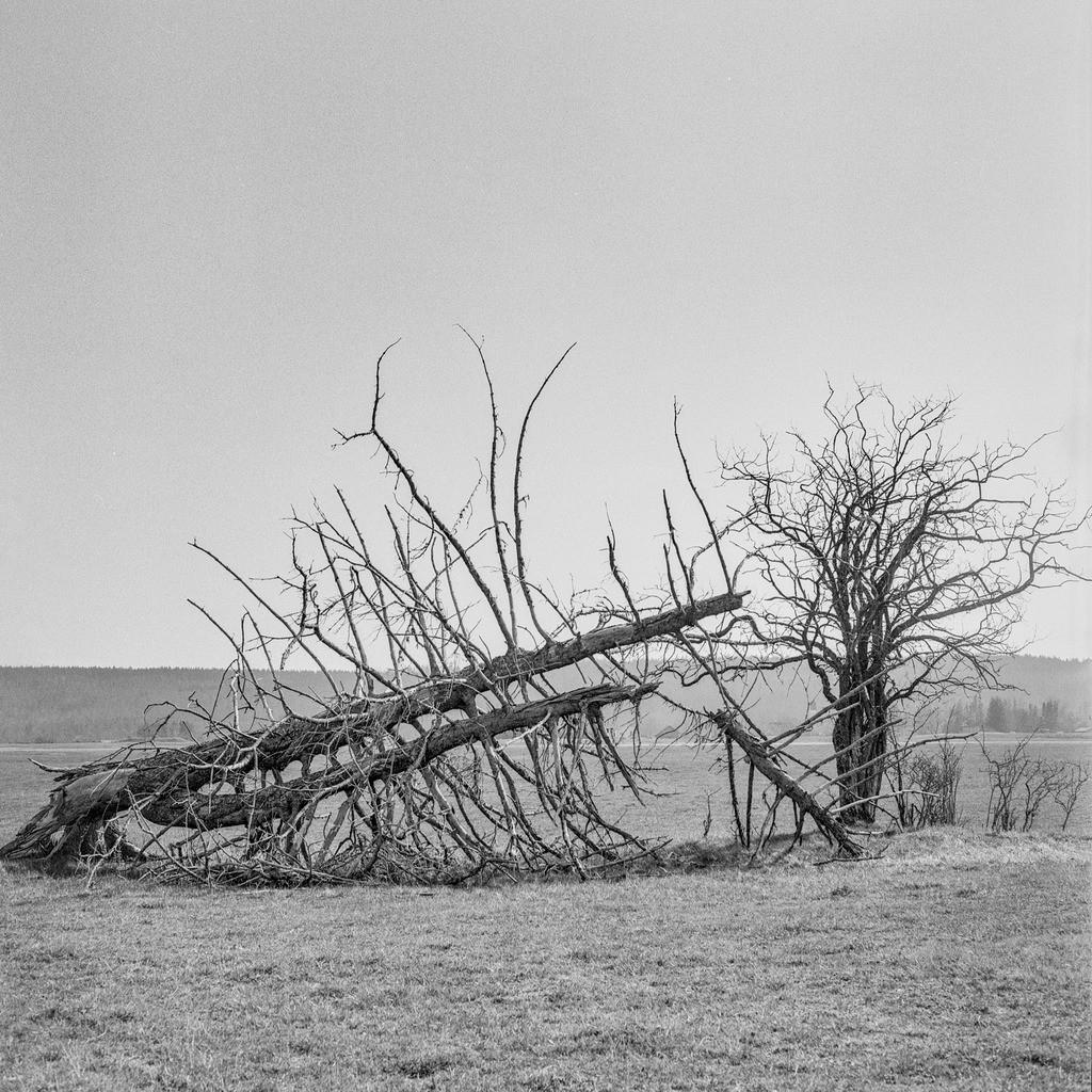 Broken | Mittelformat-Analogfotografie mit meiner Mamiya C330.