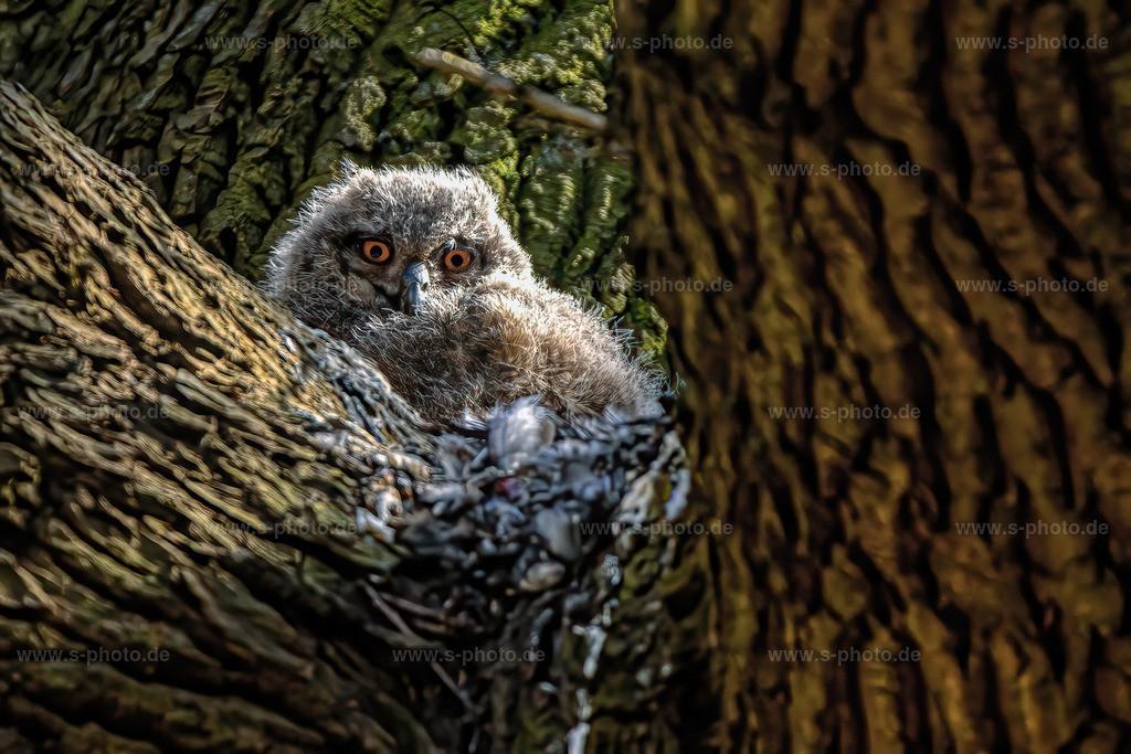 Eulenbaby | .. vom Duvenstedter Brook - Naturschutzgebiet Hamburg