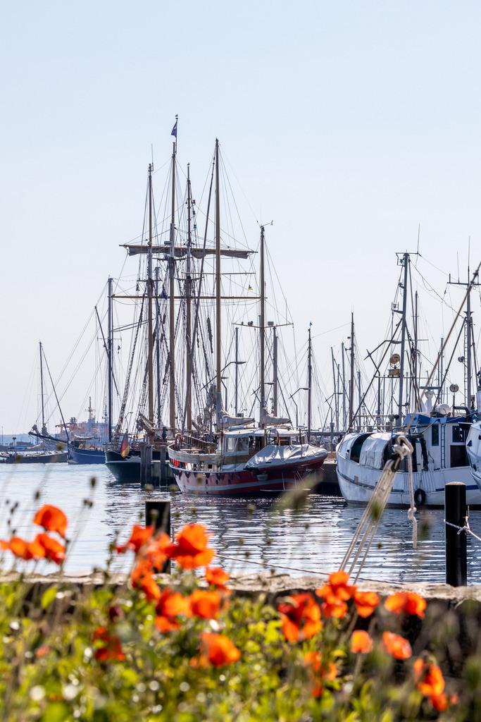 Hafen in Eckernförde | Mohnblumen am Hafen in Eckernförde