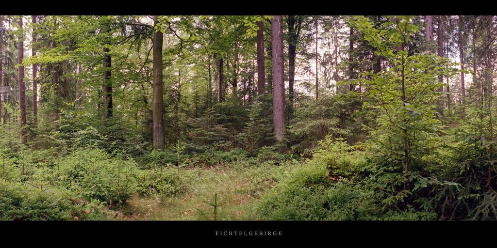 Fichtelgebirge   Mischwald mit Lichtung im Fichtelgebirge