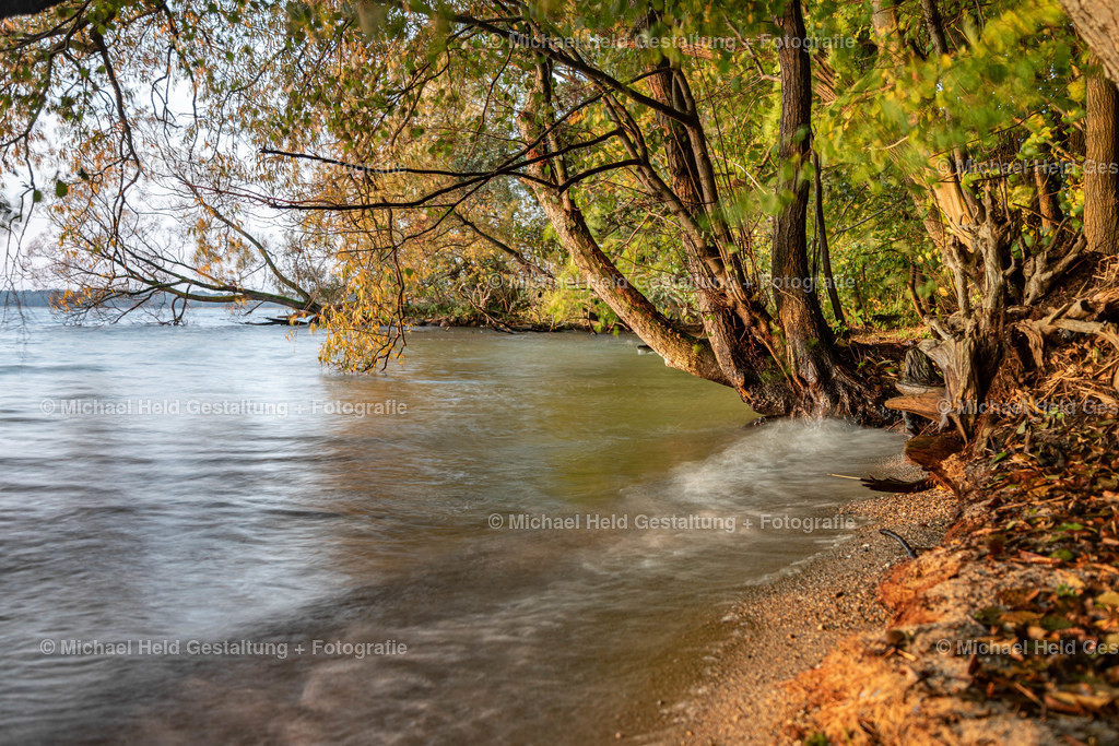 Herbstufer | Selenter See im Herbst