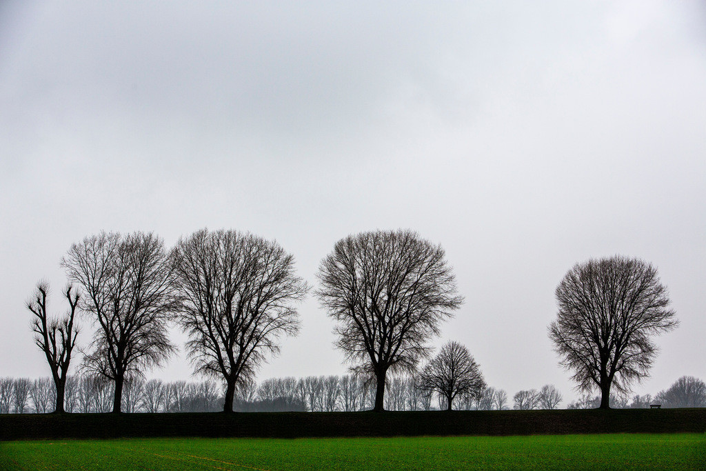 JT-130225-024 | Tristes Winterwetter, Nebel, kahle Bäume, Rheindamm bei Düsseldorf-Stockum.