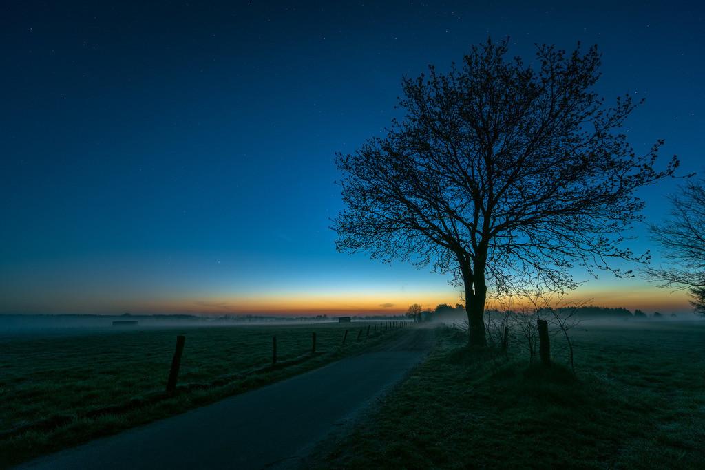 The Tree by the Roadside | Erste Morgendämmerung über einem einsamen Baum im Moor.