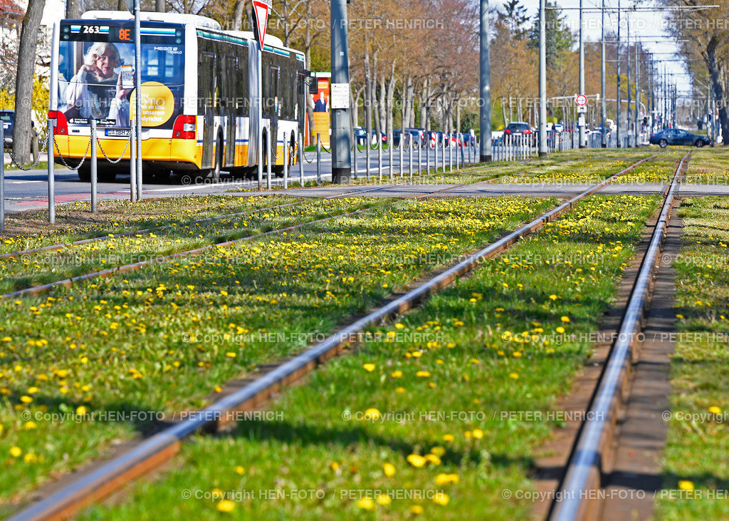 Rasengleise zwischen Eberstadt und Darmstadt - copyright by HEN-FOTO   Rasengleise zwischen Eberstadt und Darmstadt - copyright by HEN-FOTO Peter Henrich
