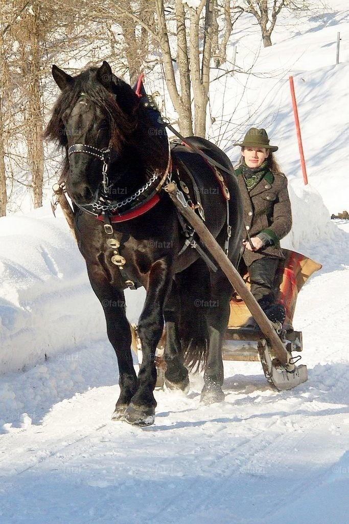 pferde-schloss-1.06-023