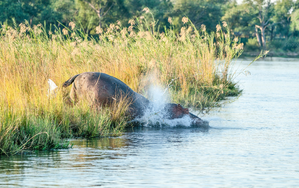 GRO09446   South Luangwa and Lower Zambezi National Parks are among the greatest national parks in Africa and are an undisputed