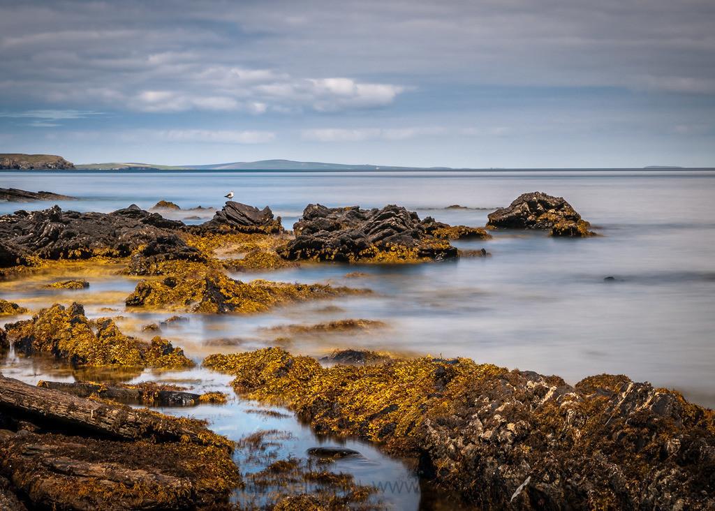 _7022643 | Somewhere on Orkney. Wieder einmal ein etwas älteres Bild aus Schottland.