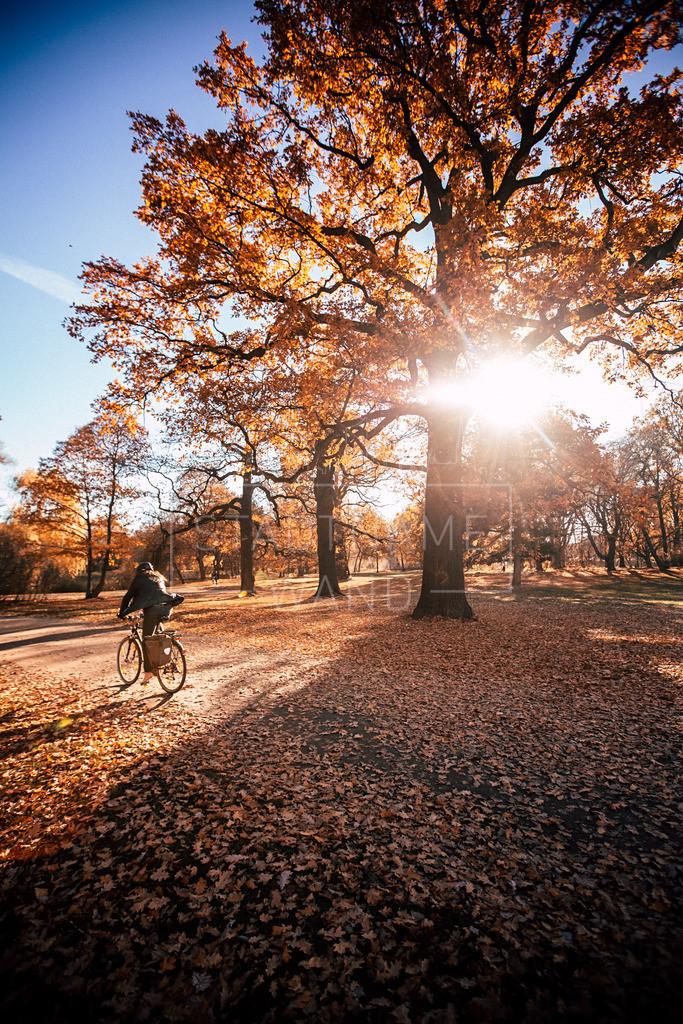 Clarapark Herbst 2