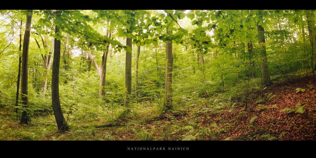 Nationalpark Hainich | Herbst im Nationalpark und Buchenwald Hainich in Thüringen