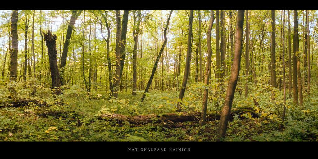 Nationalpark Hainich   Herbst im Nationalpark und Buchenwald Hainich in Thüringen