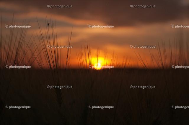 Mücke genießt den Sonnenuntergang | silhoutte einer kleinen mücke vor einem sonnenuntergang