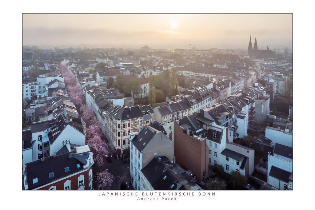 Japanische Blütenkirsche Bonn | Die Serie 'Deutschlands Stadtlandschaften' zeigt die schönsten deutschen Städte.