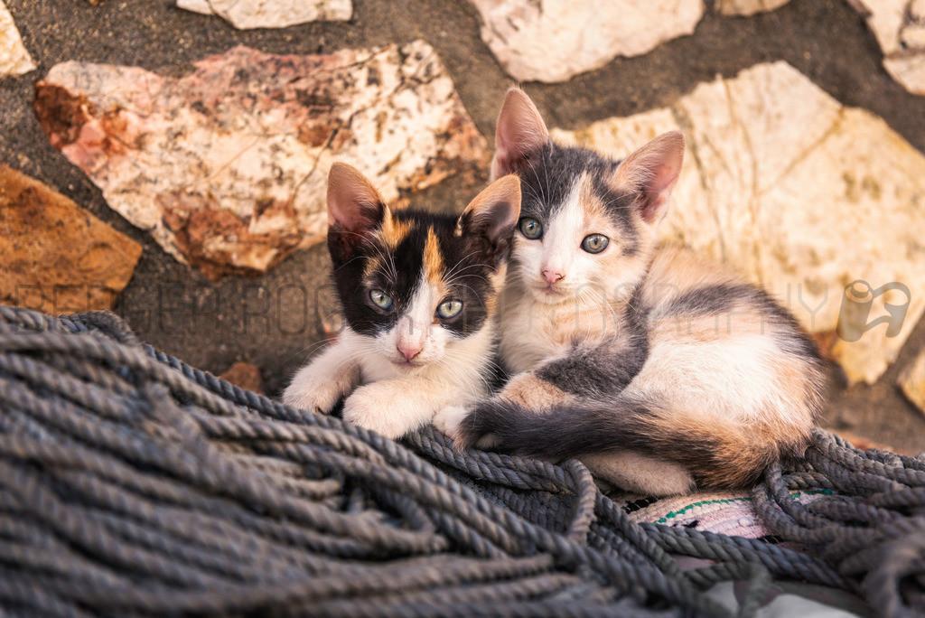 Strassenkatzen in Koroni   Aufgenommen in einer Seitengasse von Koroni, Griechenland