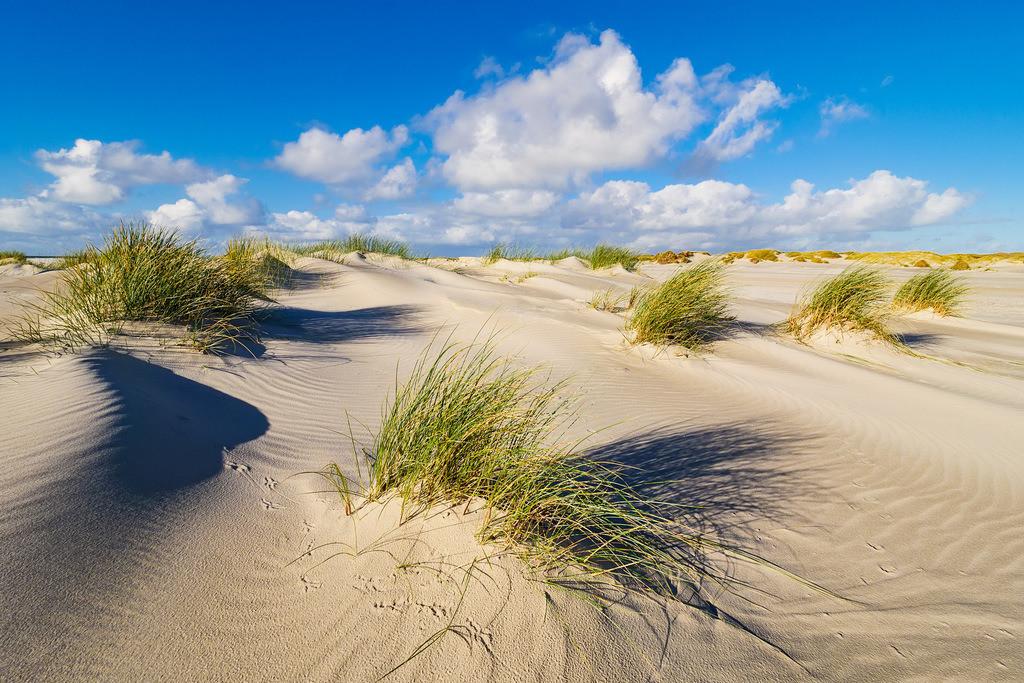 Landschaft in den Dünen auf der Insel Amrum | Landschaft in den Dünen auf der Insel Amrum.