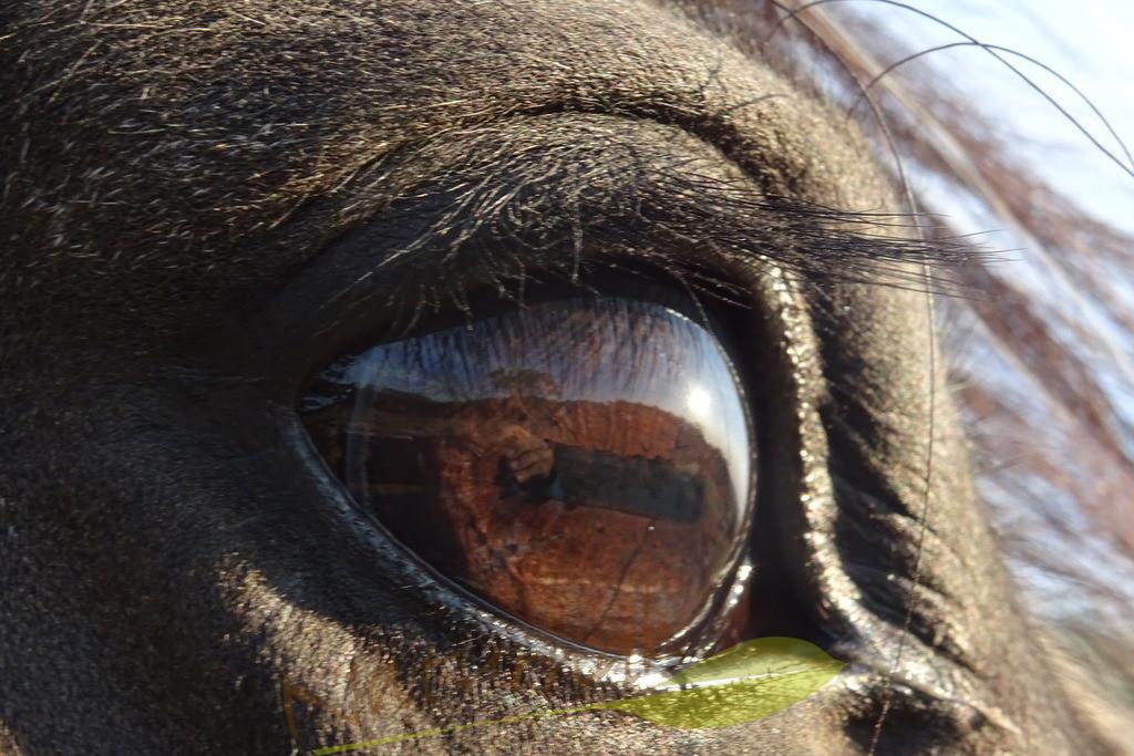 Seelenspiegel Pferd